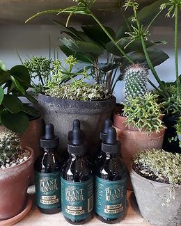 Plant-Runner-Food-Plant-Shop-Auckland-Pr
