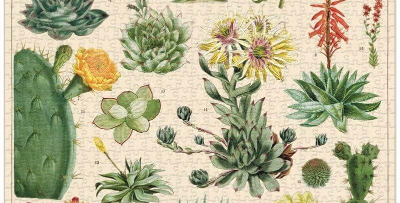 Cavallini & Co - Cacti & Succulents 1000 Pce - Vintage Puzzle