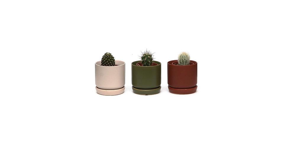 Cacti in Mini Pots x 3