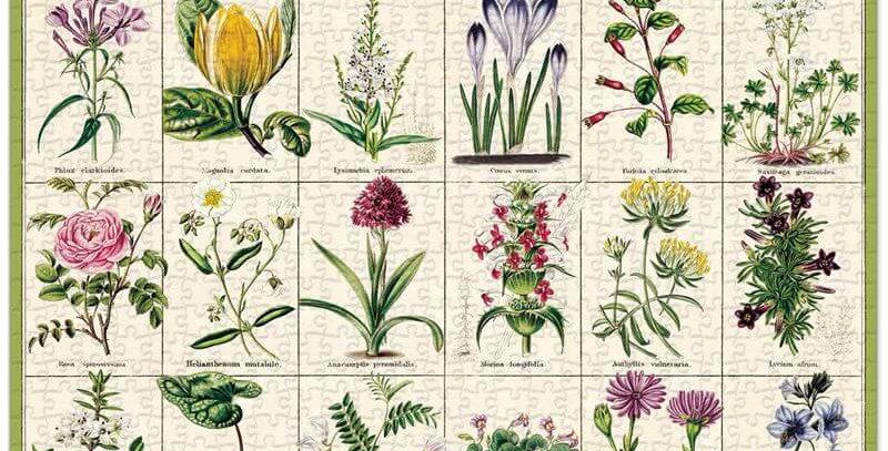 Cavallini & Co - Botanical Garden 1000 Pce - Vintage Puzzle