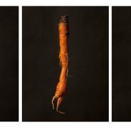 Una zanahoria bailando