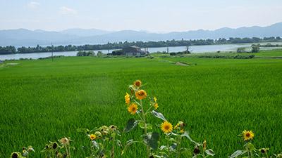 青海地区棚田