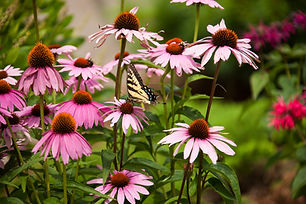 Flower and butterfly.jpg