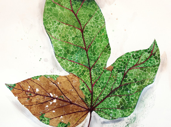 Archaeology of Leaves, Mixed media on paper (real leaf collage, watercolour, ink, pencil), 2020, 50cm x 70cm