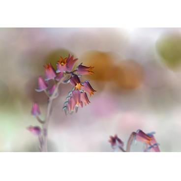 """Hannusia """"Botanical Underworld"""""""