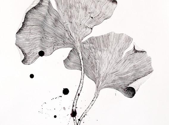 Gingko biloba, Ink on paper, 2020, 61cm x 91cm