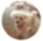 Josefina, perro, caso