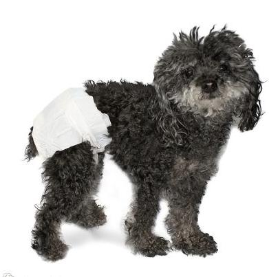Pañales diseñados para mascotas