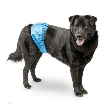 Cubre pene, si tu mascota tiene problemas de incontinencia puedes ayudarlo con este cubre pene de forma muy simple y cómoda.