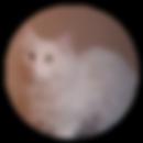 gato, darwin