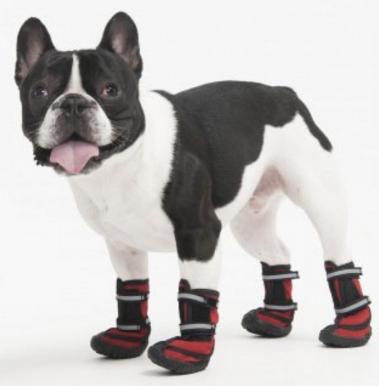 Zapatos: contamos con diversos modelos y tallas de zapatos, con suela de goma y muy resistentes, puedes venir a probárselos a tu mascota.