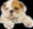 perro, pagina