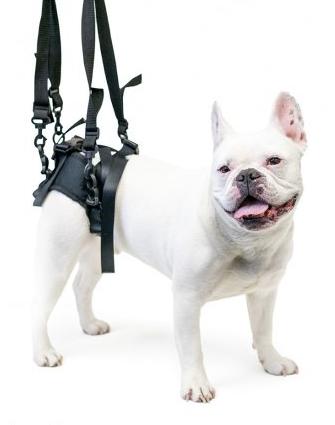 Arnes posterior de ayuda a tu mascota