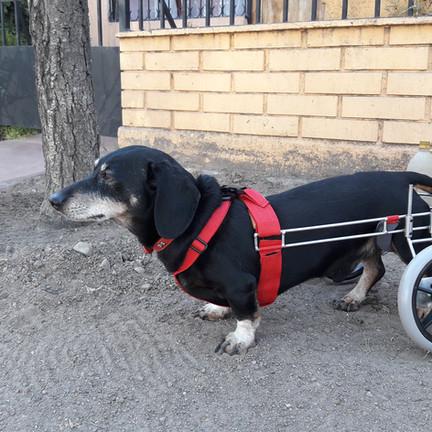 Carro ortopedico fabricado a medida