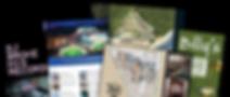 branding, graphic designer, brochures, business cards, logo design