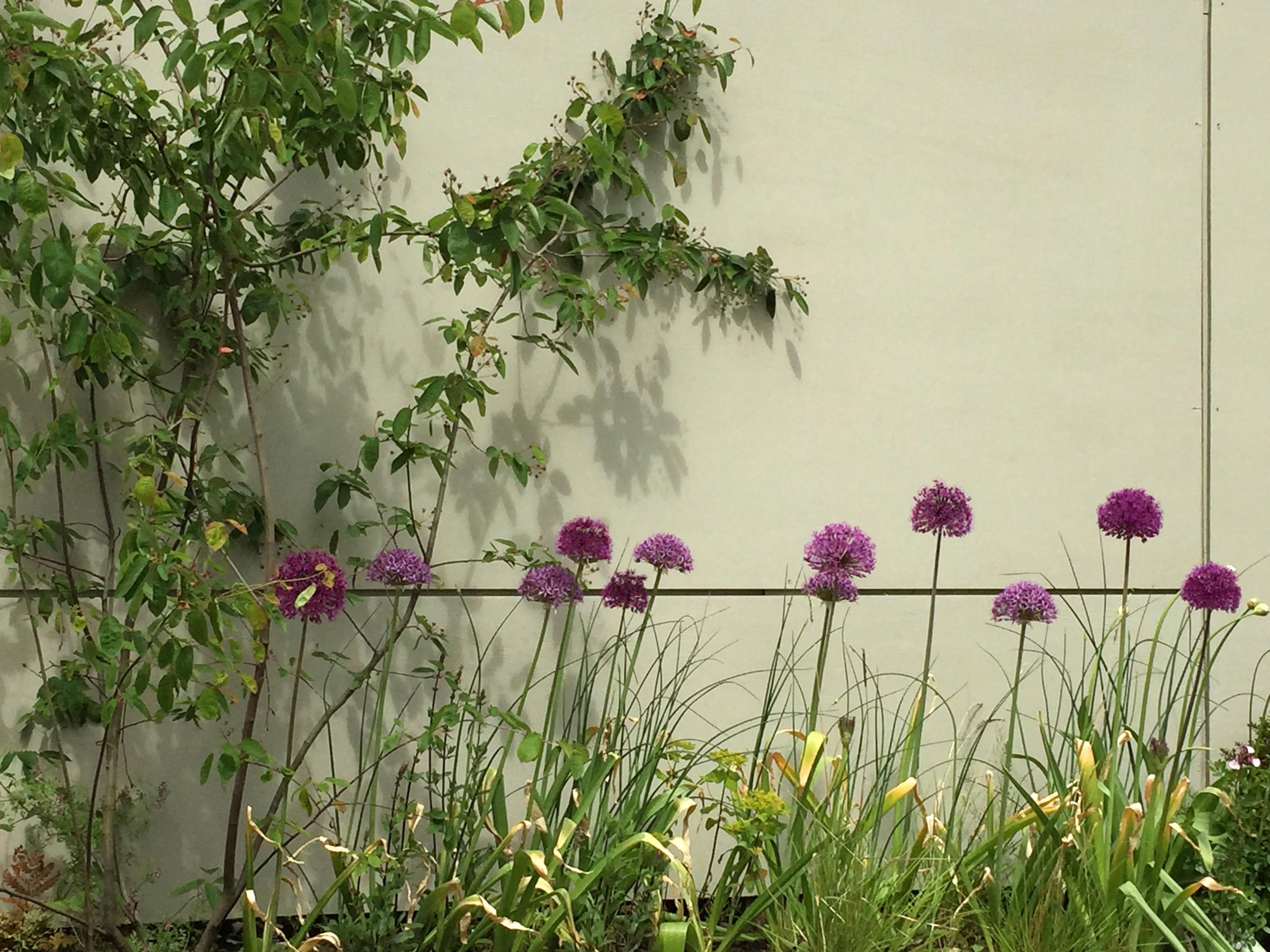 Contemporary Potager Garden