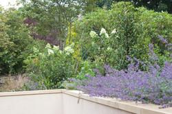 Bold Contemporary Garden Edinburgh