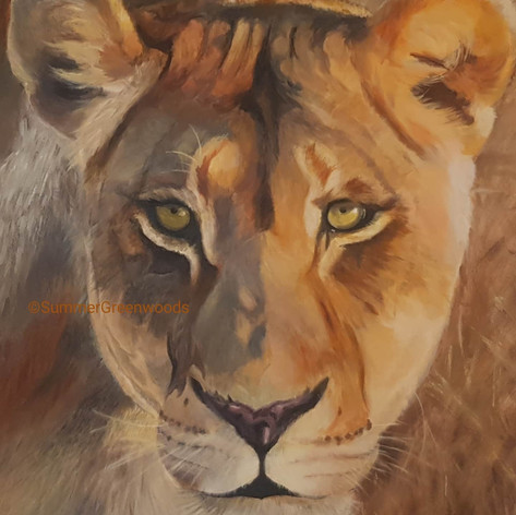 The lioness private collection