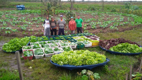 MST vence prêmio internacional por ações contra a fome