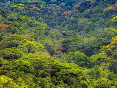 Niterói cria o Parque Natural Floresta do Baldeador