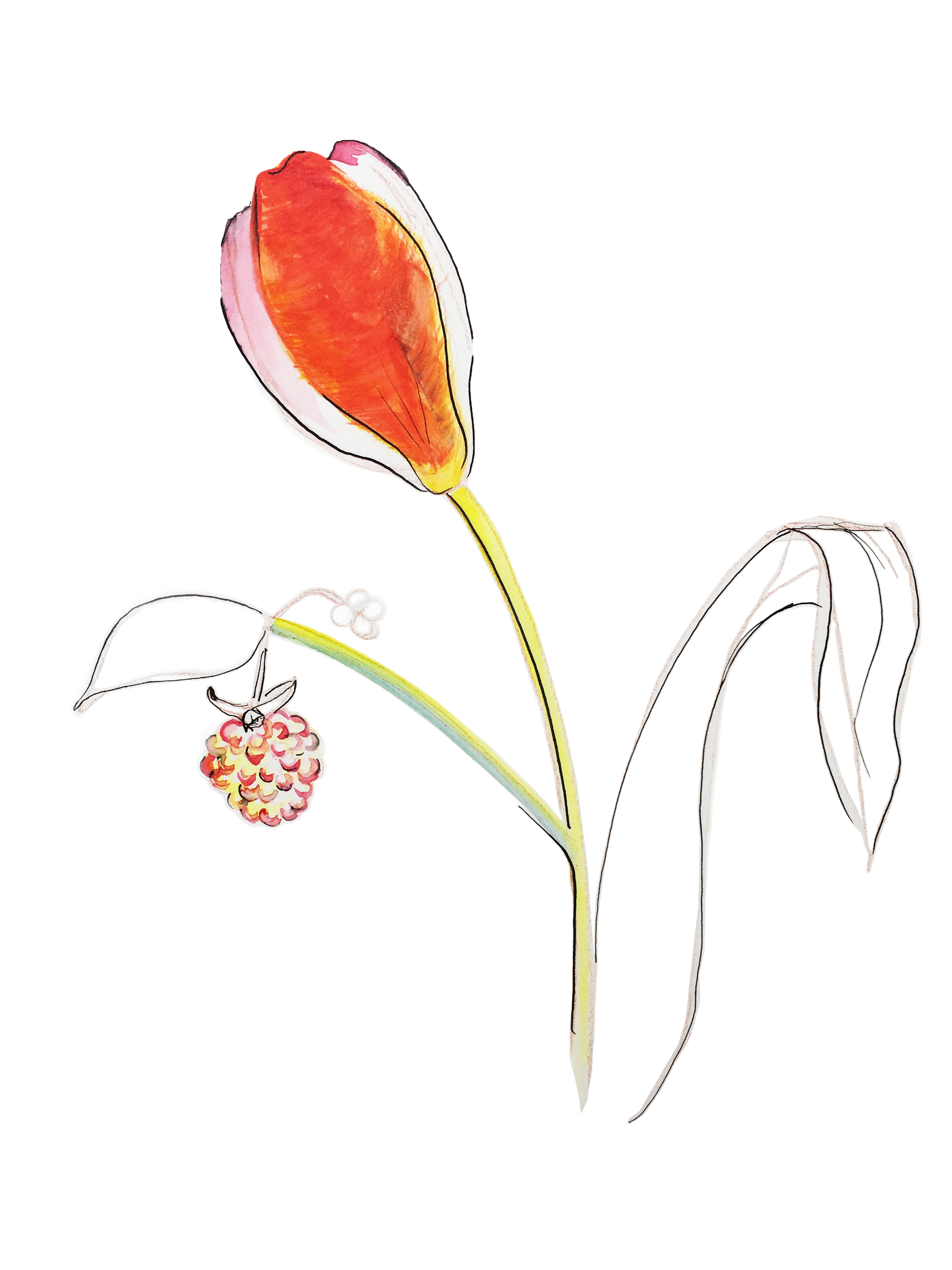 tulipone