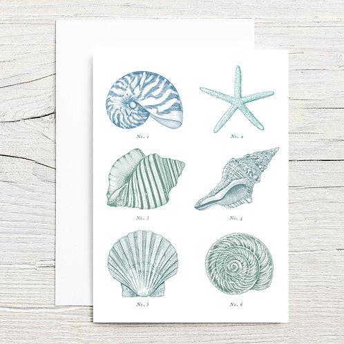 Seashell 5x7 Notecard Set (8)