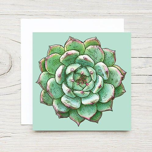 Succulent Gift Card Set (10)