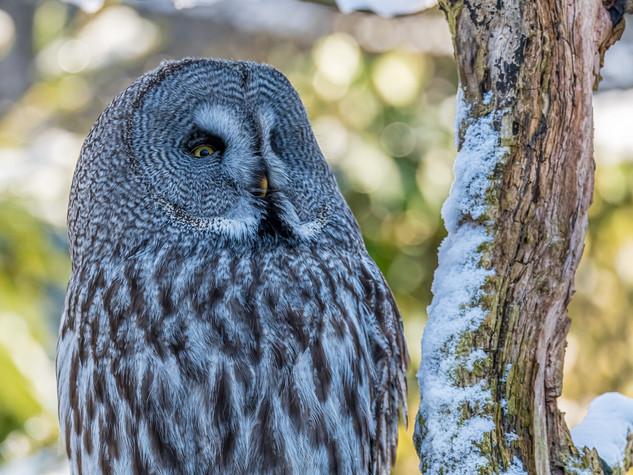 5342_2019_Tierpark_Goldau.jpg