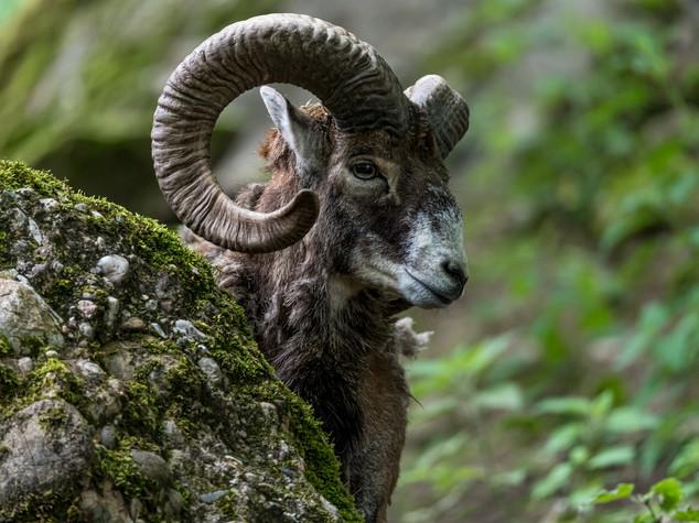 8166_2019_Tierpark_Goldau.jpg