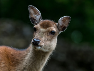 8083_2019_Tierpark_Goldau.jpg