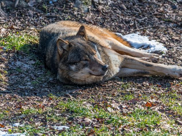 5258_2019_Tierpark_Goldau.jpg