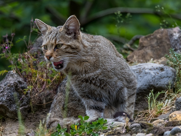 8016_2019_Tierpark_Goldau.jpg