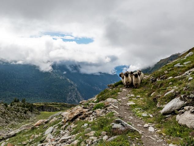 2703_2018_Oberaletschhütte.jpg