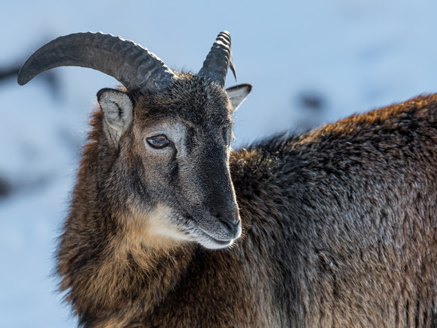 5303_2019_Tierpark_Goldau.jpg