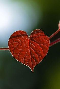 heart leaf.jpg