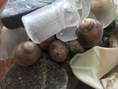 Shells ocean.jpg