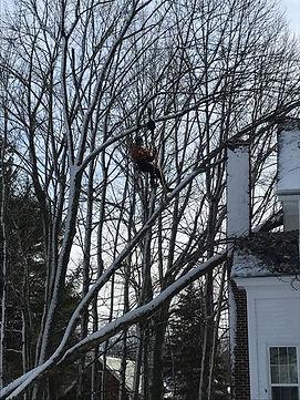 tree on church 12-09-20.jpg