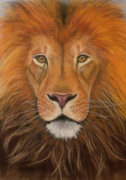 Lion King pastel 20x30