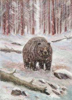 Winter Bear - Pastel 28.5 x 20.75