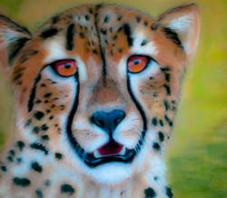 Cheeta watching