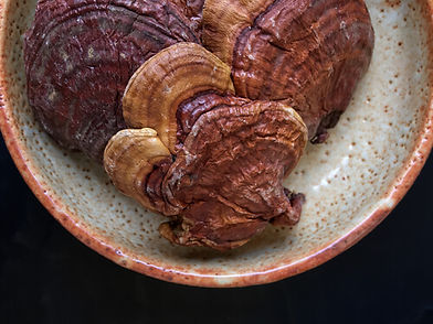 Red reishi on a plate
