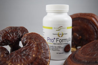 Uncompromised quality with superior red Reishi, Pro Formula Reishi is setting a new standard