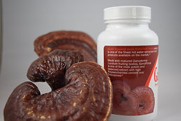 GanoPrime red Reishi is derived from 100% mature fully grown red reishi