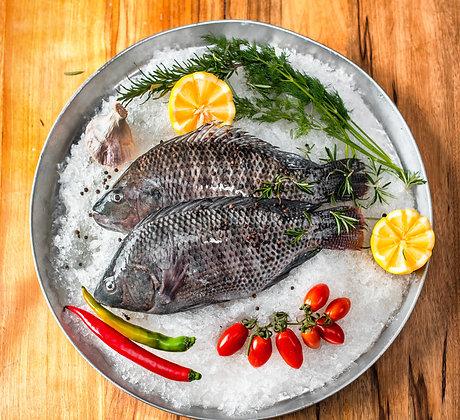 דג מושט/אמנון – טרי ונקי