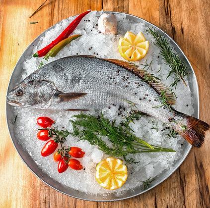 דג מוסר ים - טרי נקי