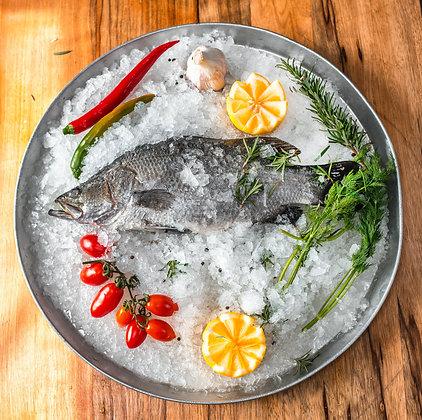 דג ברמונדי (לוקוס אוסטרלי) – נקי וטרי