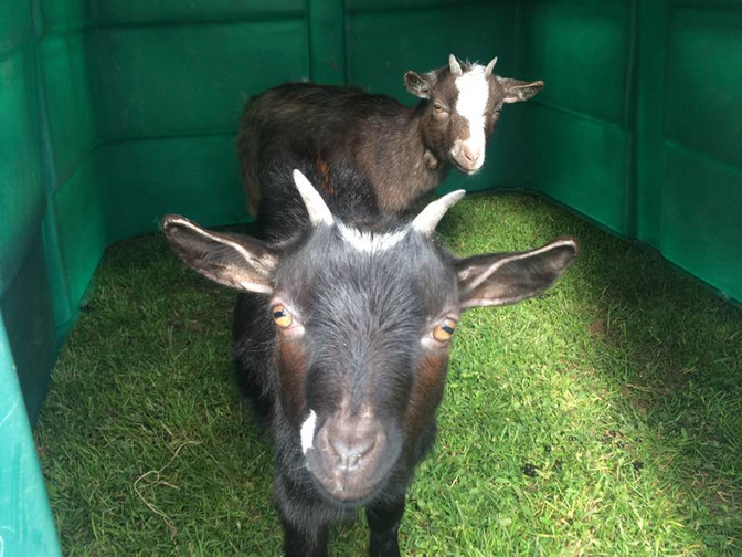 New arrivals on the farm this Easter Weekend