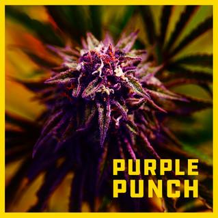 SRF-Indica-Purple-Punch-10.jpg