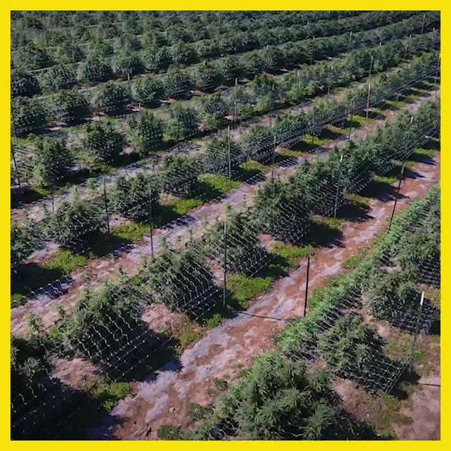 SRF-Farm-Aerial-02-1080.mov