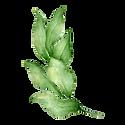 Les feuilles 4